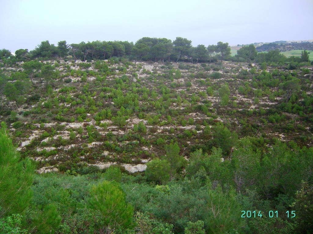 LAVORI-BOSCHIVI-FORESTALI-MELLO-2