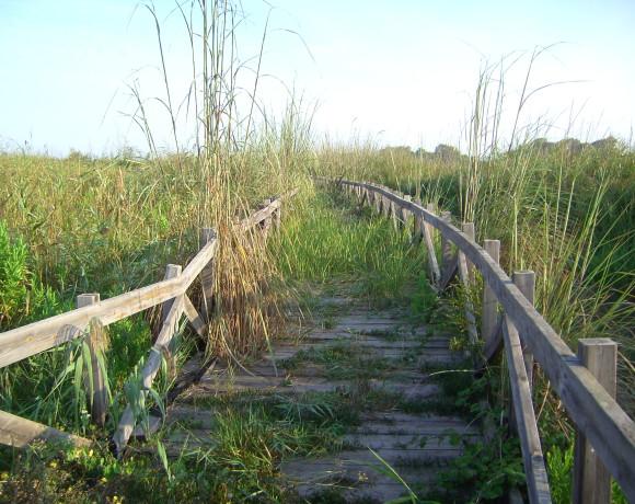 Parco Naturale Regionale Bosco e Paludi di Rauccio